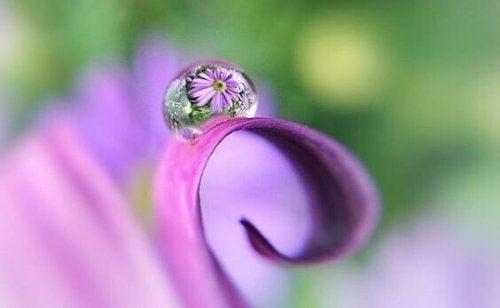 Osservare la natura per scacciare l'impazienza
