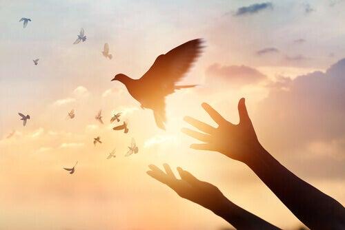 Mani che liberano colombe perché possano volare via