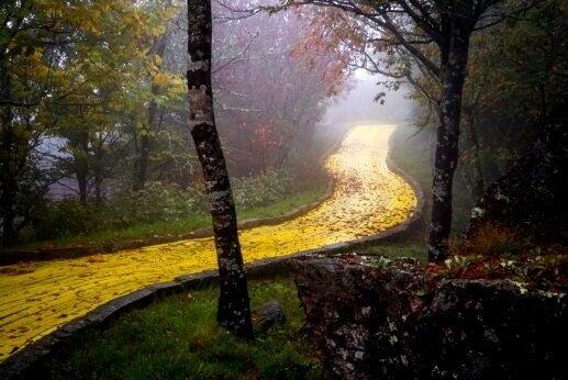sentiero dorato