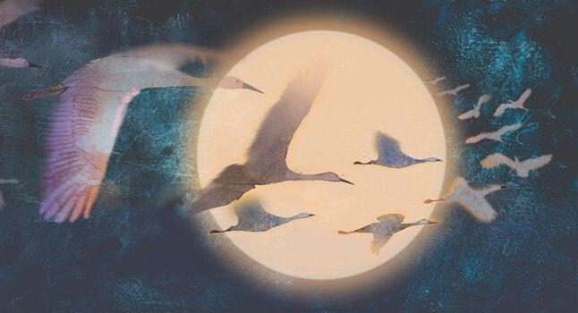 Aironi che volano attorno alla luna