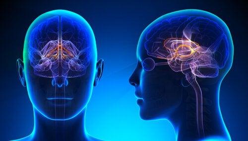 Cervello con il sistema limbico illuminato