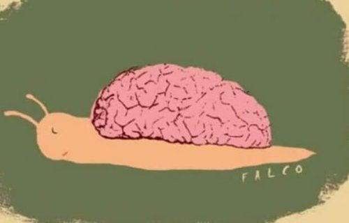 Chiocciola con cervello sulla schiena