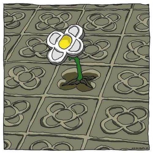 Un fiore contro il terrorismo