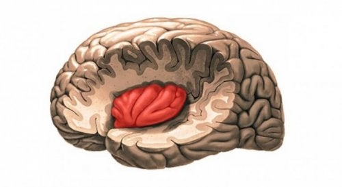 Insula localizzata nel cervello