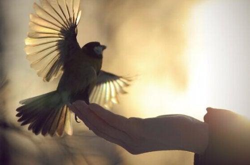 Uccellino che spicca il volo