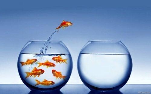 Pesce rosso che salta da una boccia all'altra