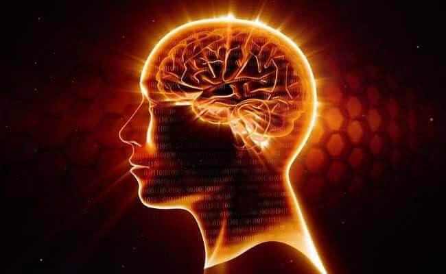 Cervello e omega 3