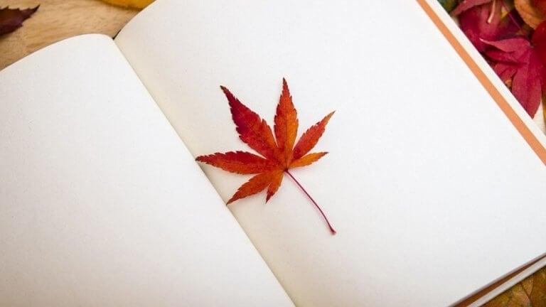 Foglia tra le pagine bianche di un libro