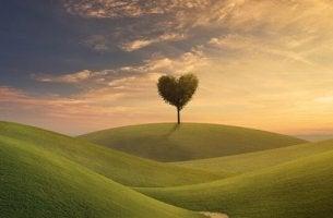 Albero a forma di cuore