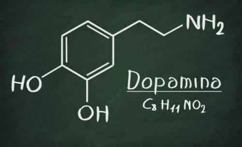 La dopamina: cos'è e quali funzioni ha?