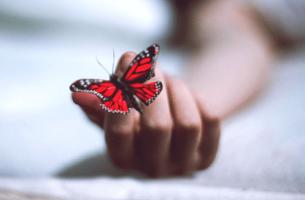 Mano con una farfalla