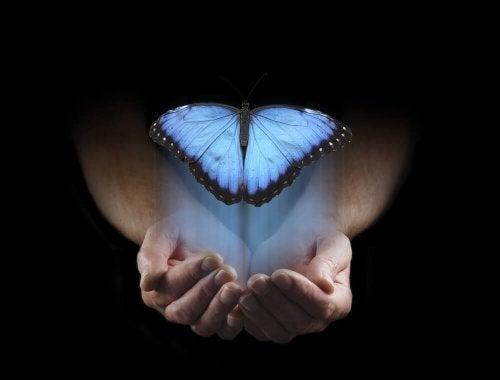 Una farfalla azzurra sopra a delle mani