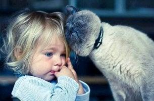 Gattoterapia gatto che si struscia contro una bambina