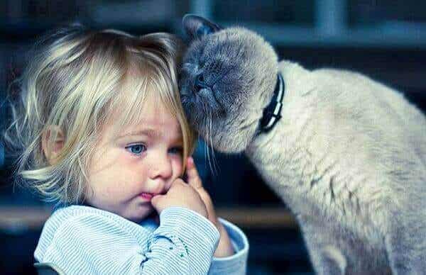 Gattoterapia: benefici di vivere con un gatto