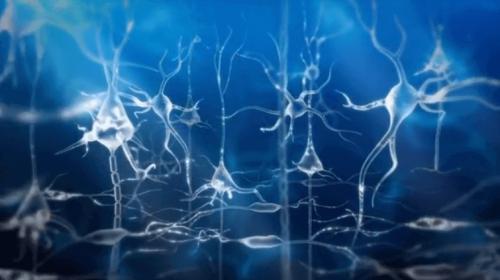 I neuroni e le onde cerebrali