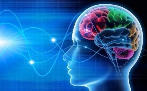 Onde cerebrali di una persona