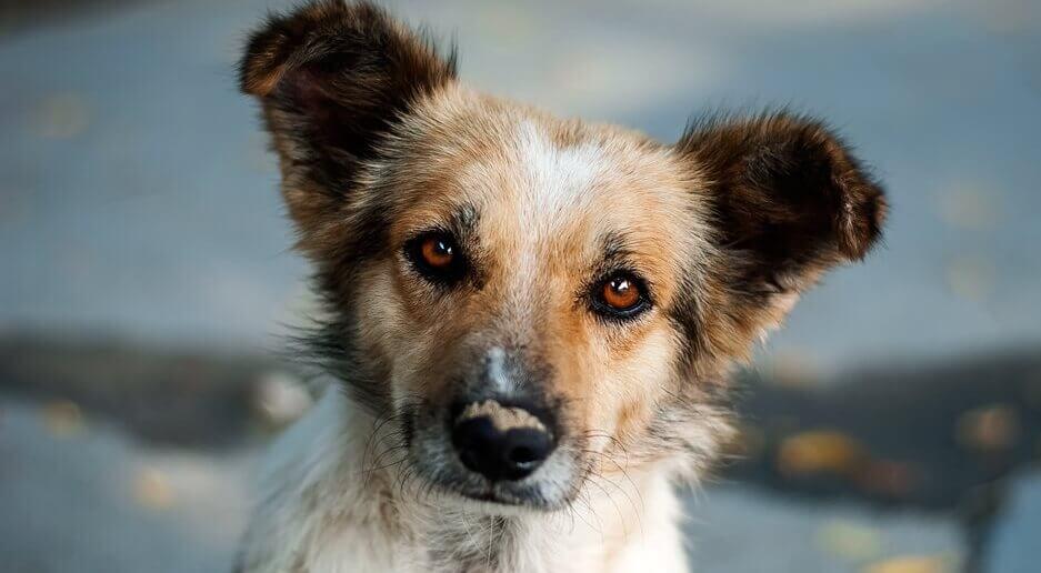 Il cagnolino curioso: racconto del destino