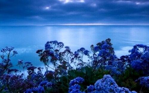Mare e fiori blu colore antistress