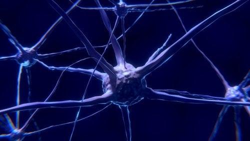 Il neurone: caratteristiche e funzionamento