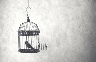 Uccellino dentro una gabbia aperta che non ha il coraggio di uscire
