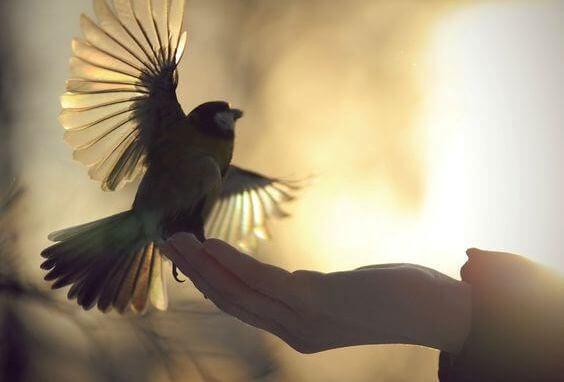 Uccello che spicca il volo