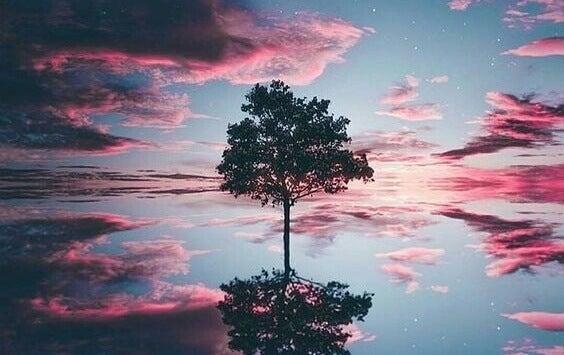 Albero con nuvole sullo sfondo