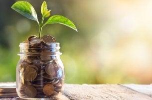 Barattolo con monete e pianta