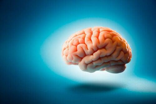 Cervello su sfondo celeste