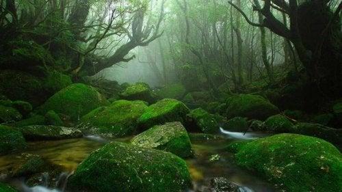 Paesaggio in un bosco, rappresentazione del Seitai