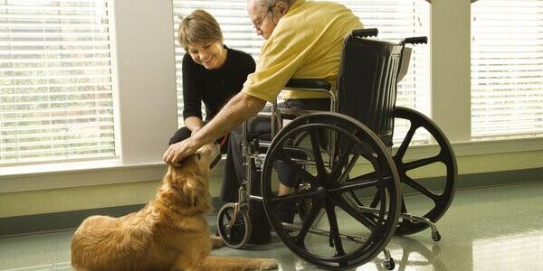 Persona sulla sedia a rotelle e cane