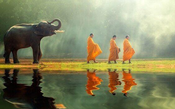Elefante segue monaci buddisti
