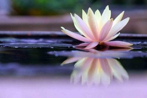 Un fiore sull'acqua