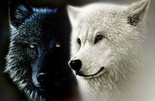 Lupo bianco e lupo nero leggenda Cherokee