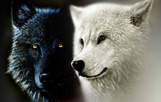 Leggenda Cherokee dei due lupi