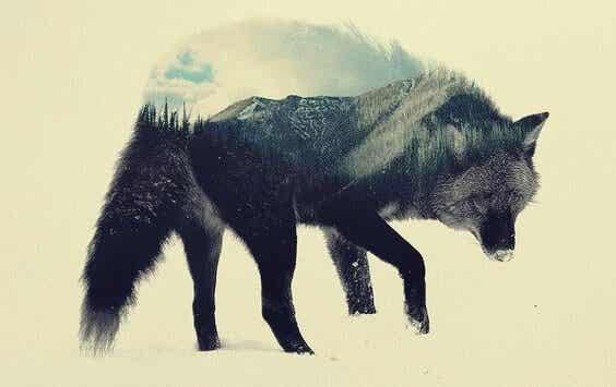Il lupo della steppa: un'opera per riflettere