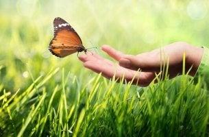 Mano e farfalla