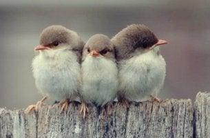 3 uccellini, simbolo dei 3 tipi di amicizia secondo Aristotele