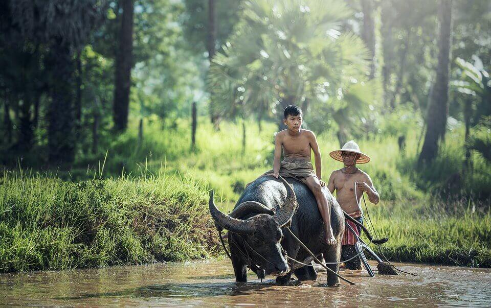 Agricoltori cambogiani
