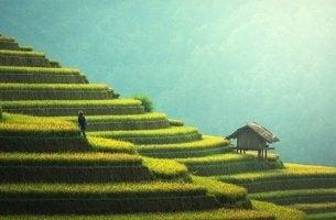Evoluzione culturale - agricoltura