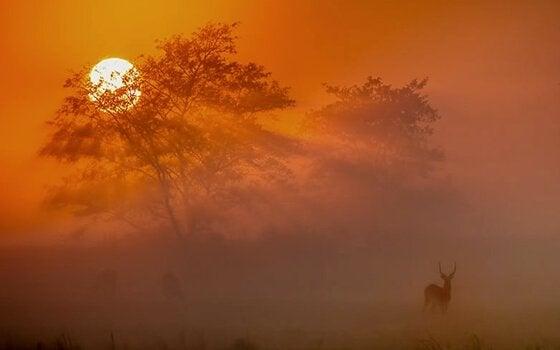 Antilope tramonto proverbi africani