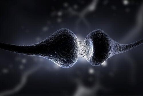 Neurotrasmettitori, sinapsi