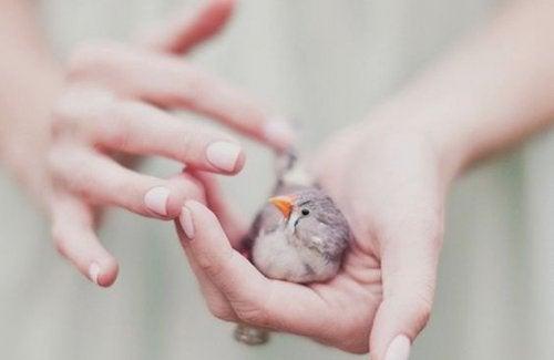 Donna con uccellino fra le mani