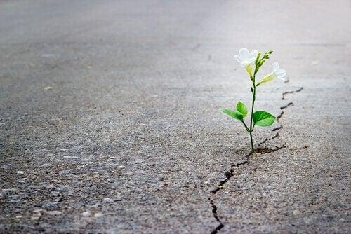 Fiore che cresce in una crepa del cemento, simbolo del superamento di un ricordo traumatico