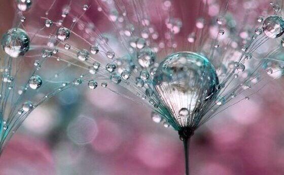 Fiore con gocce d'acqua