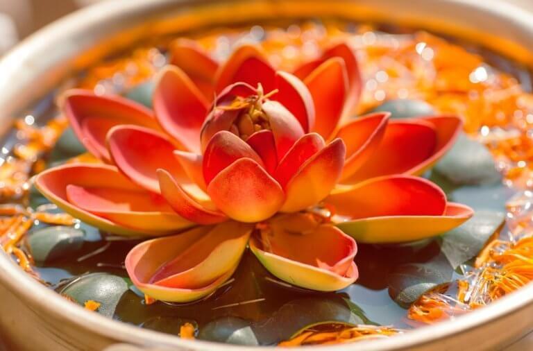 Fiore di loto proverbi indù