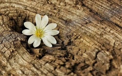 Fiore in un tronco