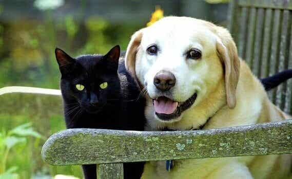 Lutto per un animale domestico: consigli