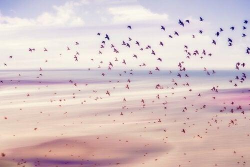 Uccelli in volo a rappresentazione della libertà