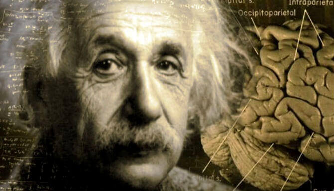 Il cervello di Einstein: incredibile storia
