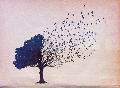 Albero si svuota di uccelli